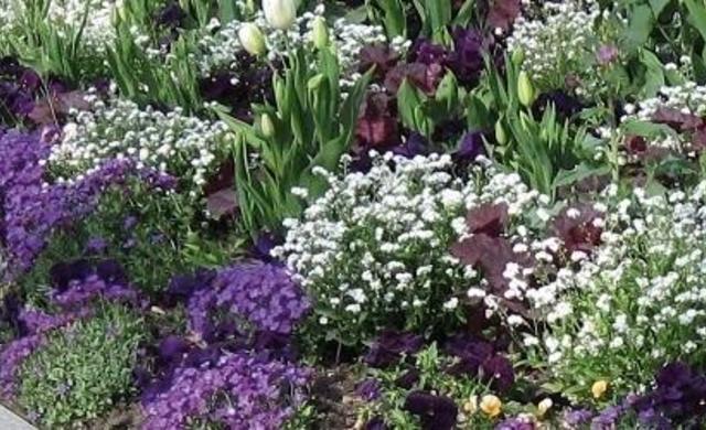 Expertentipps_Gartenpflanzen_490x250