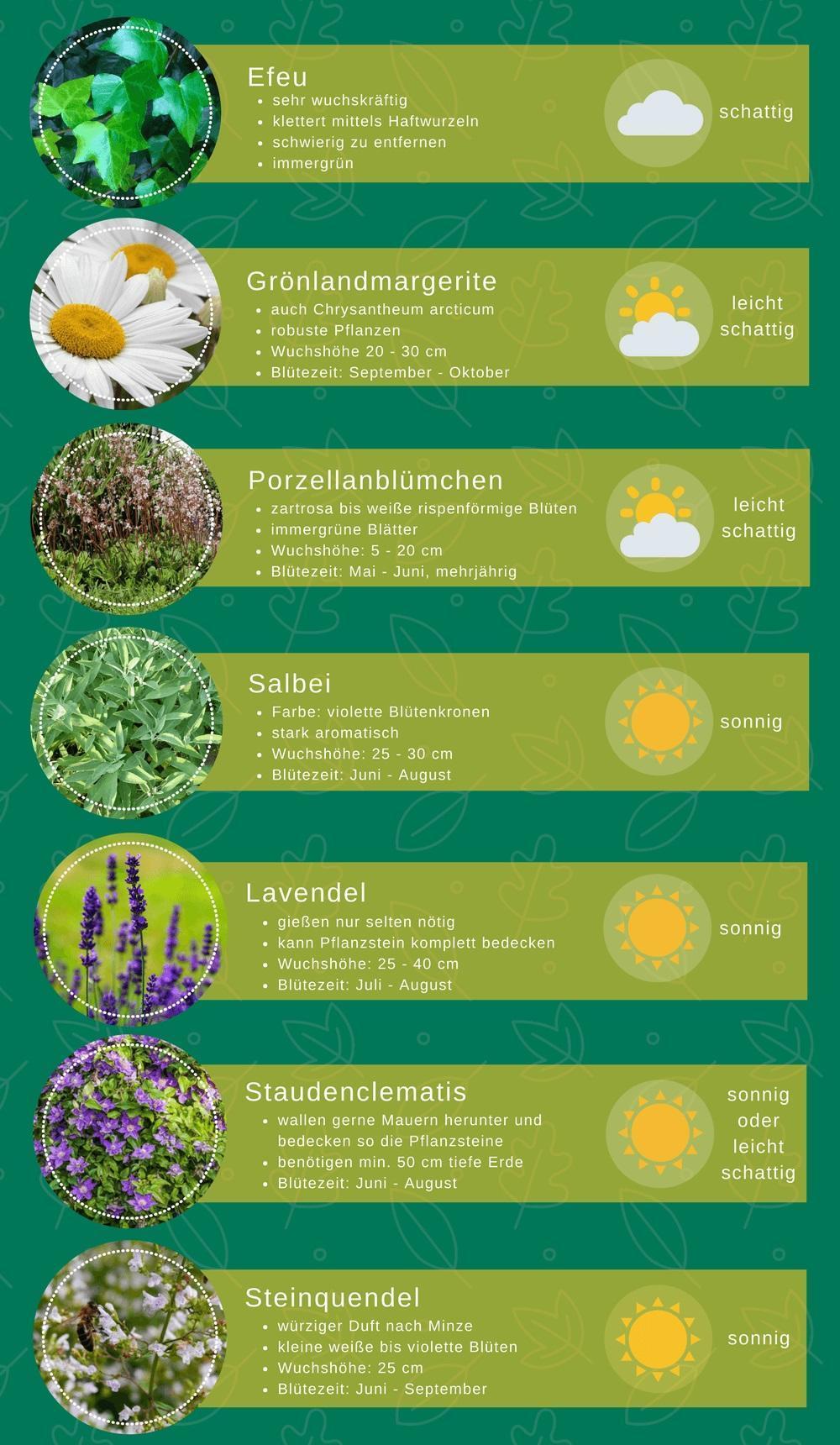 Auflistung von Pflanzen mit Eigenschaften und Standortangaben, die für Pflanzsteine geeignet sind